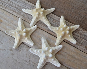 White Knobby Starfish, Chocolate Chip Starfish 1-2"