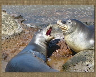 Monk Seal Photo Note Card with Envelope, Wildlife Card, Blank Note Card, Hawaii Photo Card, Big Island Photo Card, Hawaiian Monk Seal