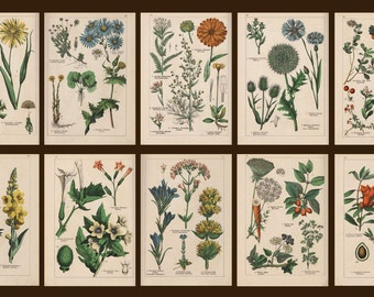 Botanical Collection#1  of 20 vintage images pictures herbs 1898s (Russian language)  Instant Download printable 300dpi