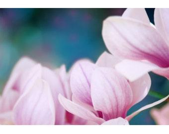 nature photography, magnolia bloom, giclee, still life, minimalist, nature photography, magnolia, pink, magenta, zen, dreamy