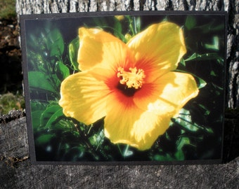 Yellow and Red Hawaiian Hibiscus Flower Photo Card