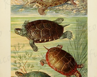 Turtles on land and in water, digital download art print, for scrapbooking, mixed media, altered art, collage