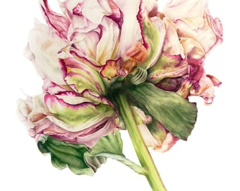 Botanical Print, Flower Painting, Peony Print, Peony Painting, Watercolor Flower Painting, Botanical Illustration, Watercolor Flower, Peony