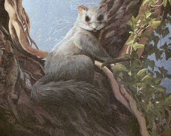 """Squirrel Tailed Door Mouse """"Buy one, choose another free"""" Also fat or edible door mouse, mouse, wildlife, animal prints,  wildlife prints,"""