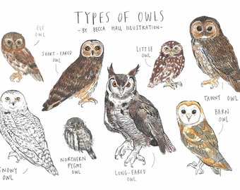 Types of Owls A6 Greetings Card