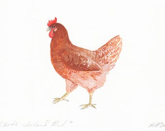 Rhode Island Red - Original Illustration - Pen and Watercolor - 5x7