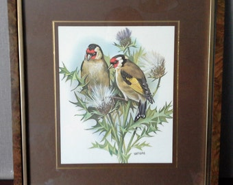 goldfinch framed print by vortigern