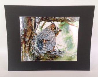 Great Horned Owl Photograch - Matted