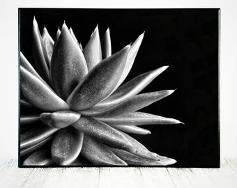 Black white photography etsy nz succulent art print succulent photograph succulent print succulent art photography print mightylinksfo Image collections