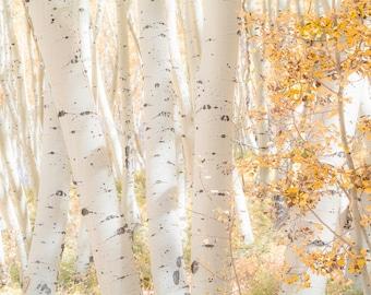 Aspen tree wall art, fall decor, Colorado art, aspen trees fall, gold leaves aspens, rustic wall decor, aspen trees Colorado | White Woods