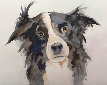Border Collie pet painting dog portrait dog art dog memorial, pet loss gift, pet memorial, pet birthday,