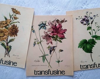 Listing pharmacy collection transfusine - large flowers
