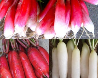 Icicle Radish French Mix Grown To Organic Standards
