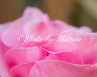 PRINTS of Macro Flower