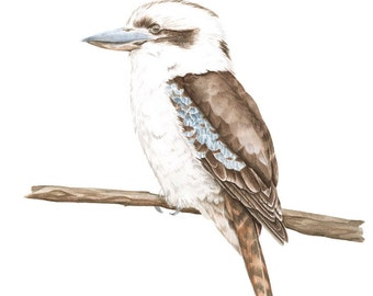 Archival print of a Kookaburra, from an original watercolour painting.