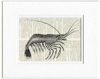 shrimp dictionary page print