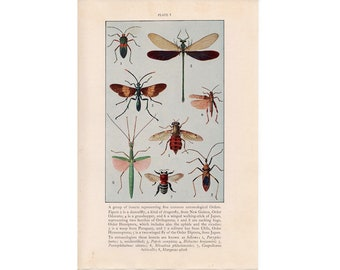 c. 1934 INSECTS PRINT - vintage insect print - vintage entomology print - old bug print - vintage lithograph of insects - dragonfly - wasp
