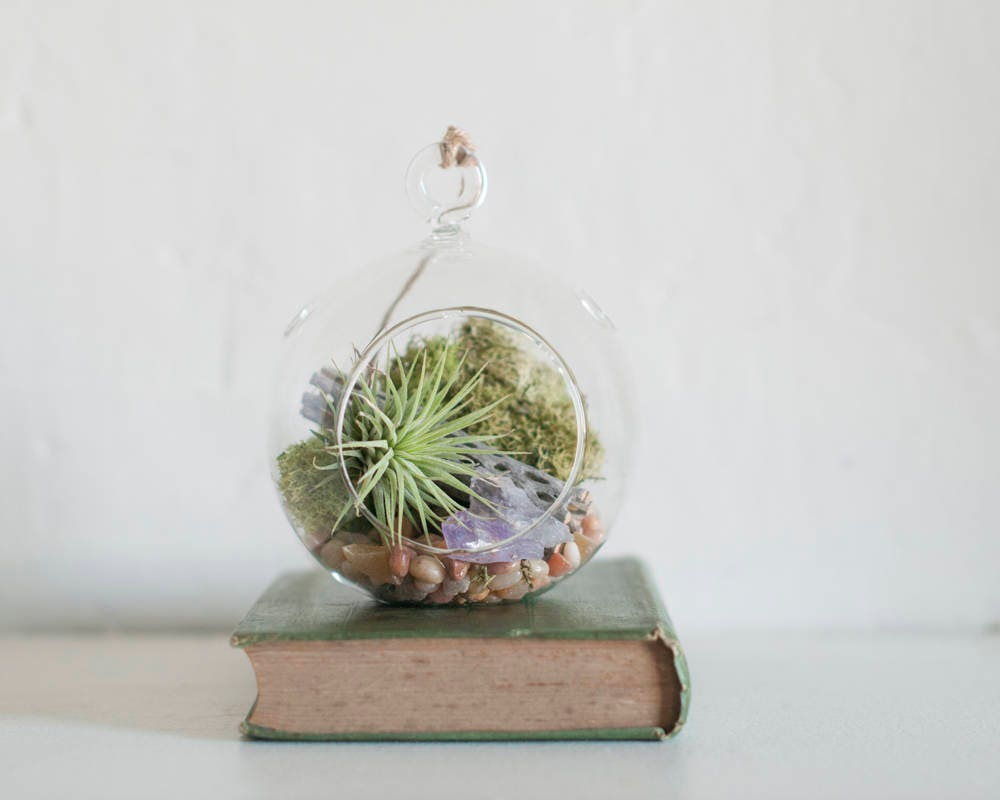 Air Plant Hanging Terrarium Kit Amethyst Birthday Gift Best Friend College Student Mom From
