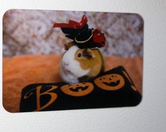 Fridge Magnet: Guinea Pig Halloween Lady Pirate