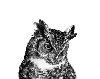 Owl Photo Print // Baby Gift // Great Horned Owl // Contemporary Wall Art // Nursery Art // Black and White // Baby Boy // Baby Girl