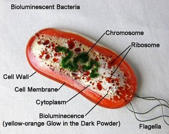 Bacteria Magnet Fused Glass Glow in the Dark  Vibrio
