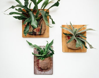Mounted Staghorn Fern with Vintage Burlap Wrap