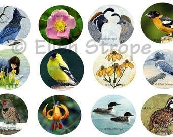 STICKERS, Envelope Seals, Birds, Flowers, Art, Ellen Strope, Repositionable adhesive, gifts, Fun stickers