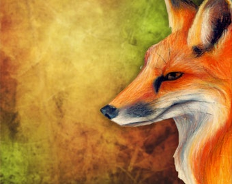 Red Fox Giclee Print