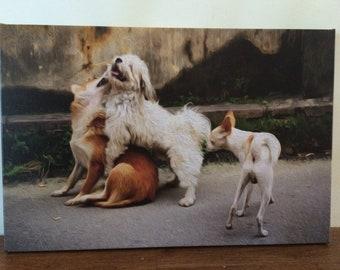 Street Dogs, Original photograph canvas wall art print