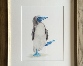 Framed Archival Print of an Original Watercolor Painting of the Blue Footed Booby / Exotic & Interesting Animals