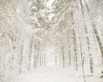 Winter white, winter snow, snowfall, snowflakes, bare trees, winter wedding, white wedding, falling snow, skiing, forest, snow, fallen snow