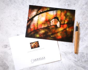 Nature photo card   christmas card   photo card   photographic print   nature card   autumn leaves   sycamore   colours   for her   blank