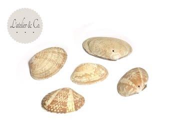 20 shells holes 18x11mm Shell Beach (x 2 packs of 10pcs)