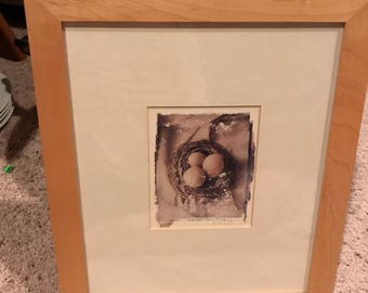 Simple double matted wood framed bird eggs in nest