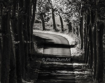 Summer road, Limousin, France, black & white photography, trees, forest, country road, nature, shady road, chiaroscuro
