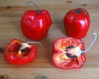 Rocoto Manzano HOT Pepper 10+ heirloom seeds, rare tree pepper