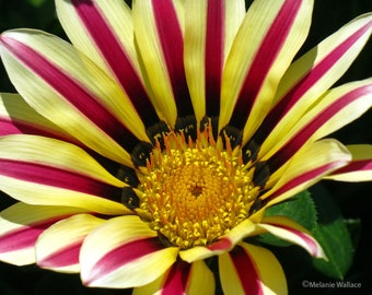 Pink & Yellow Flower