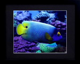 Tropical Fish / Tropical Print / Tropical Wall Art - Blue Art Print - Large Art / Large Wall Art - Ocean Photography / Nature Photography