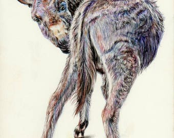 Donkey - Hand signed small fine art print - 'Does my bum look big in this?'