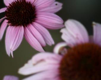 Artistic Macro Flower Petal Canvas Print