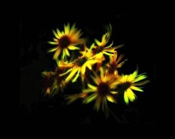 Yellow Wildflower Group