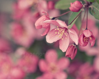 pink flower photography, spring, cherry blossom, nature photography, botanical photography, crabapple, pastel, feminine, girly / in bloom