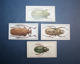 New Zealand Beetles     Superb Vintage 1925 Cards   Unmounted