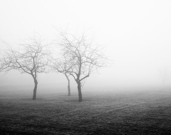 Black and white photograph of trees. Contemporary landscape photography for dark masculine decor. Birthday gift for sophisticated man.