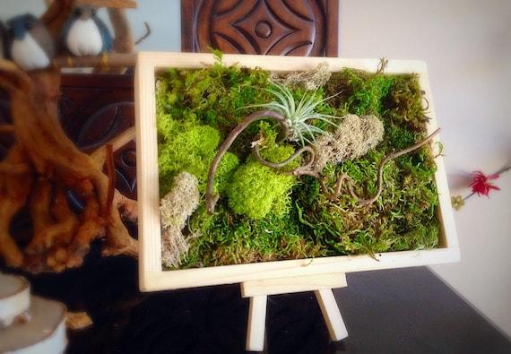 Moss Art Wall/ Hanging Garden/ Vertical Garden/ Living Wall/ Moss  Garden/Air Plant Holder/Curly Natural Branches/ Preserved Living Wall/