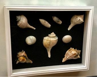 Nautical Wall Decor, Shadow Box, Nautical Shadow Box, Coastal Wall Art, Seashell Wall Art,  Nautical Pictures, Shadow Box Art, Ocean Art