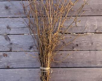 Hazel tree branches. Hazel twigs bundle. Hazel sticks. Ritual sticks.