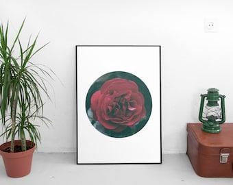 Rose Photography, Garden Art, Rose Print, Red Rose Print, Rose Decor, Flower Photography, Floral Print, Large Wall Art, Macro Photography