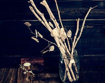 Birch Sticks for craft & lunaria wood sticks natural craft sticks and branches Tree twig craft supplies rustic wedding dried arrangement