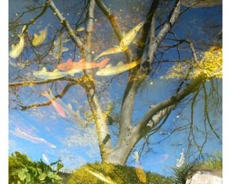 Nature Photography - Reflection